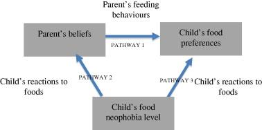 Fig 1: Conceptual Model Of Possible Relationships Between Parents' Beliefs, Children's Food Preferences And Children's Food Neophobia.