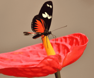 Butterfly Gifting The Pause